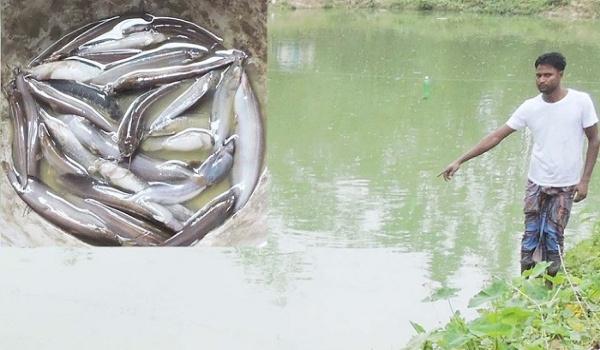 পাঁচবিবিতে পুকুরে বিষ প্রয়োগে ৭ লাখ টাকার ক্ষয়ক্ষতি,থানায় মামলা