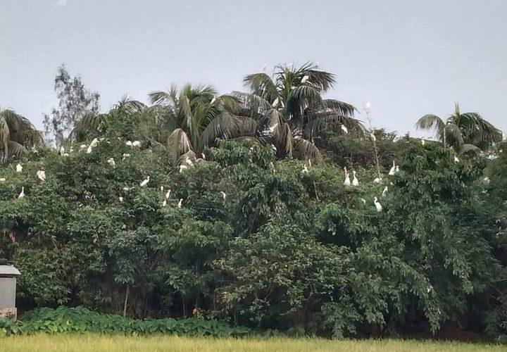 নালিতাবাড়ীতে পৃষ্ঠপোষকতার অভাবে হারিয়ে যাচ্ছে বক বাড়ীর বকপাল